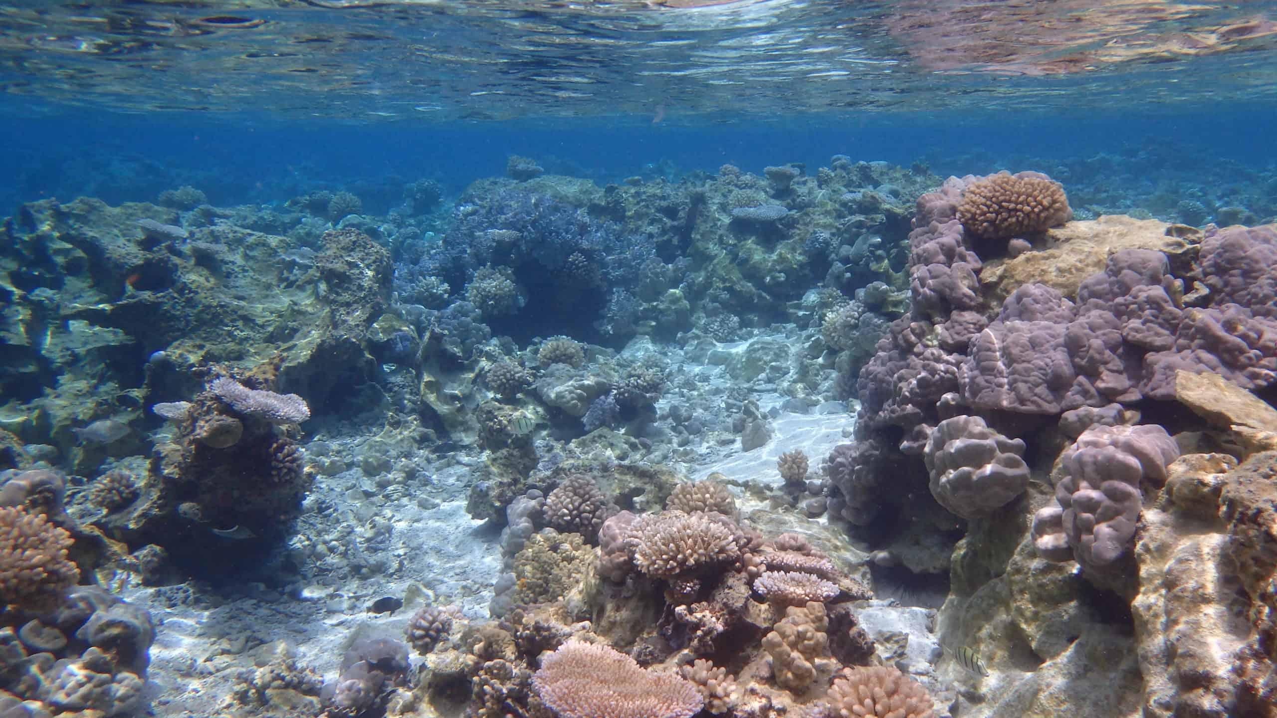 Jardin de corail de Tahaa