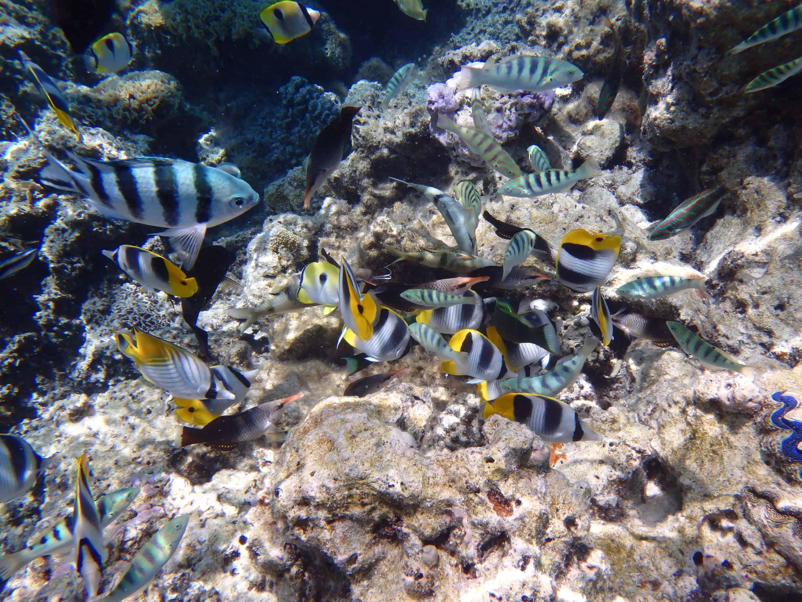 Poissons du lagon de Bora Bora
