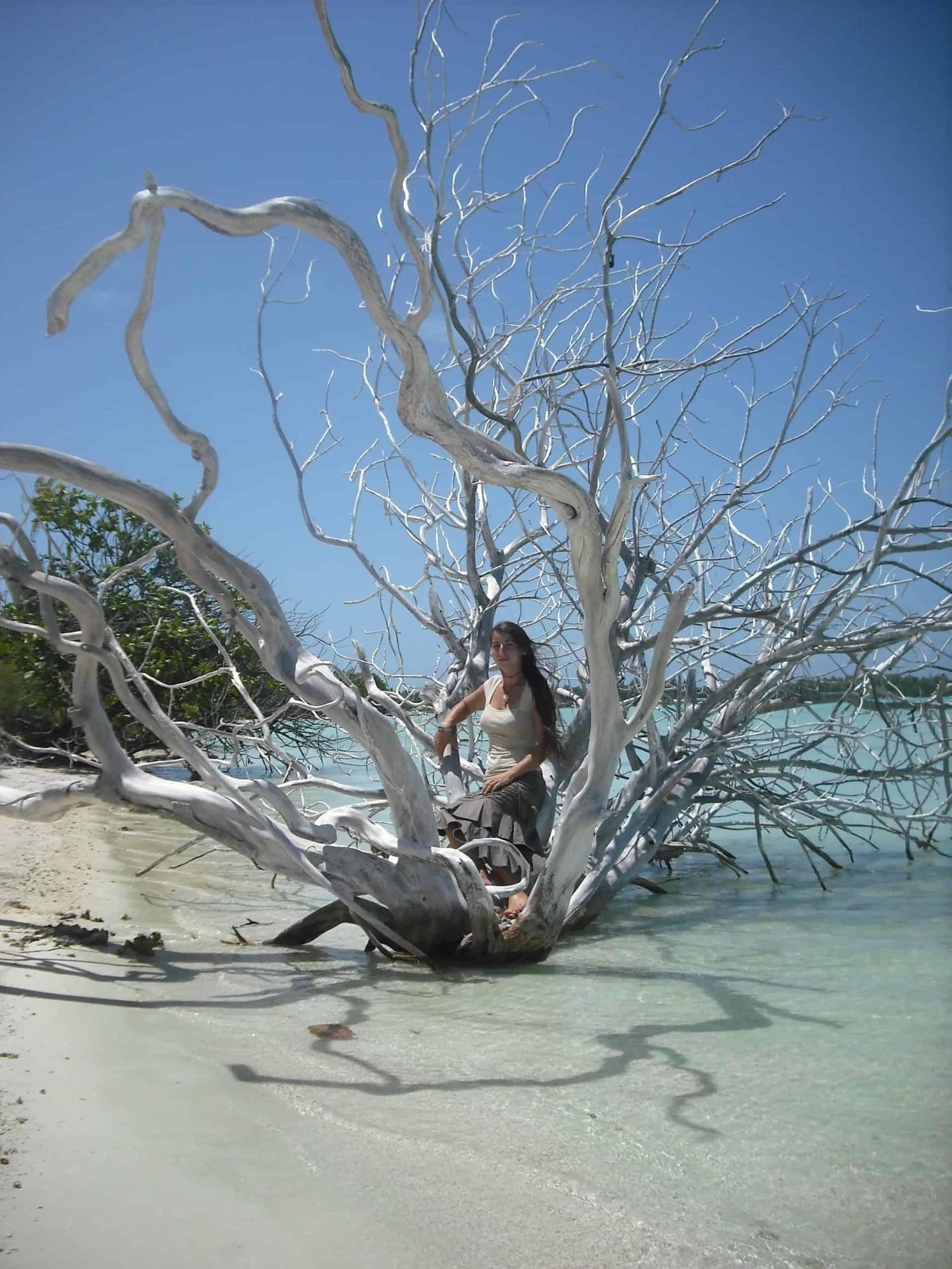 arbre sur la plage de Kauehi