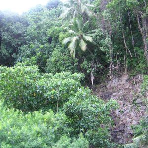 Foret à Tahiti