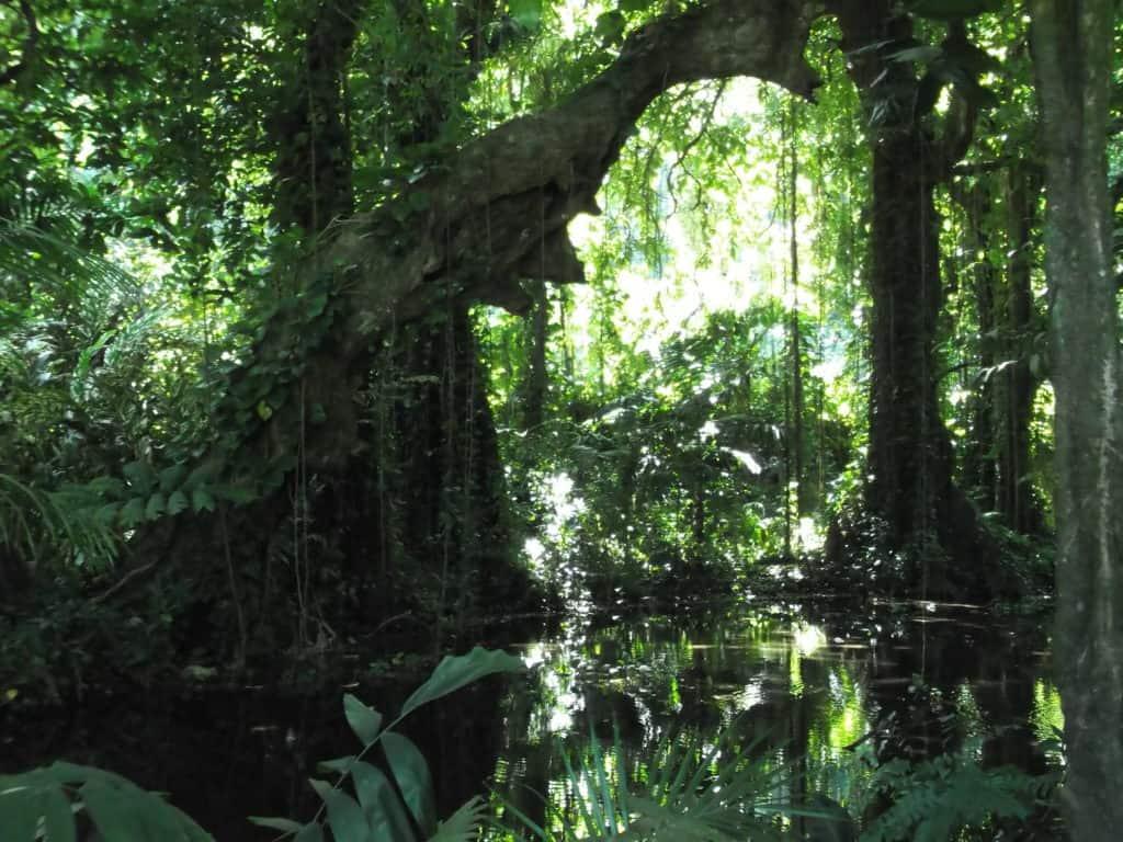 arbre au jardin botanique de Tahiti