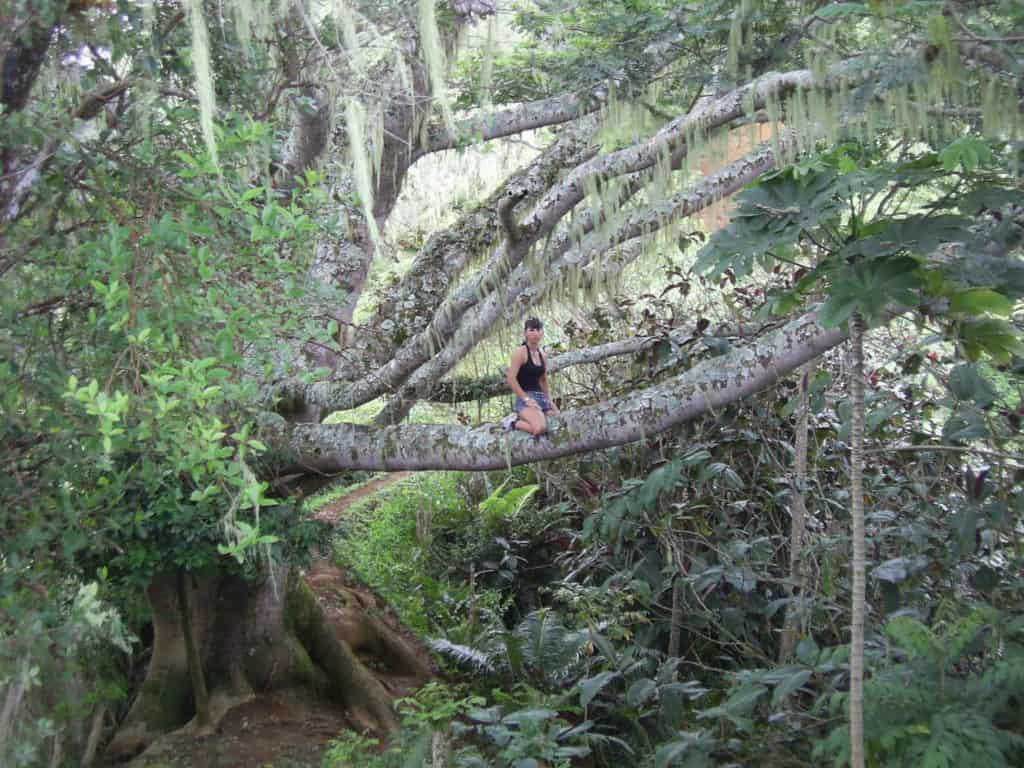 Rando au mont Aorai à Tahiti