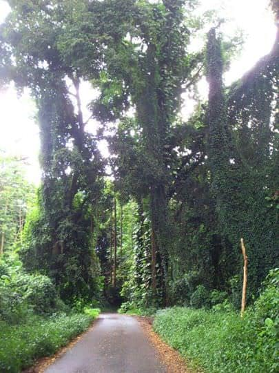 Route du belveder à Tahiti