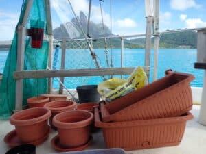 Pots plantes à bord