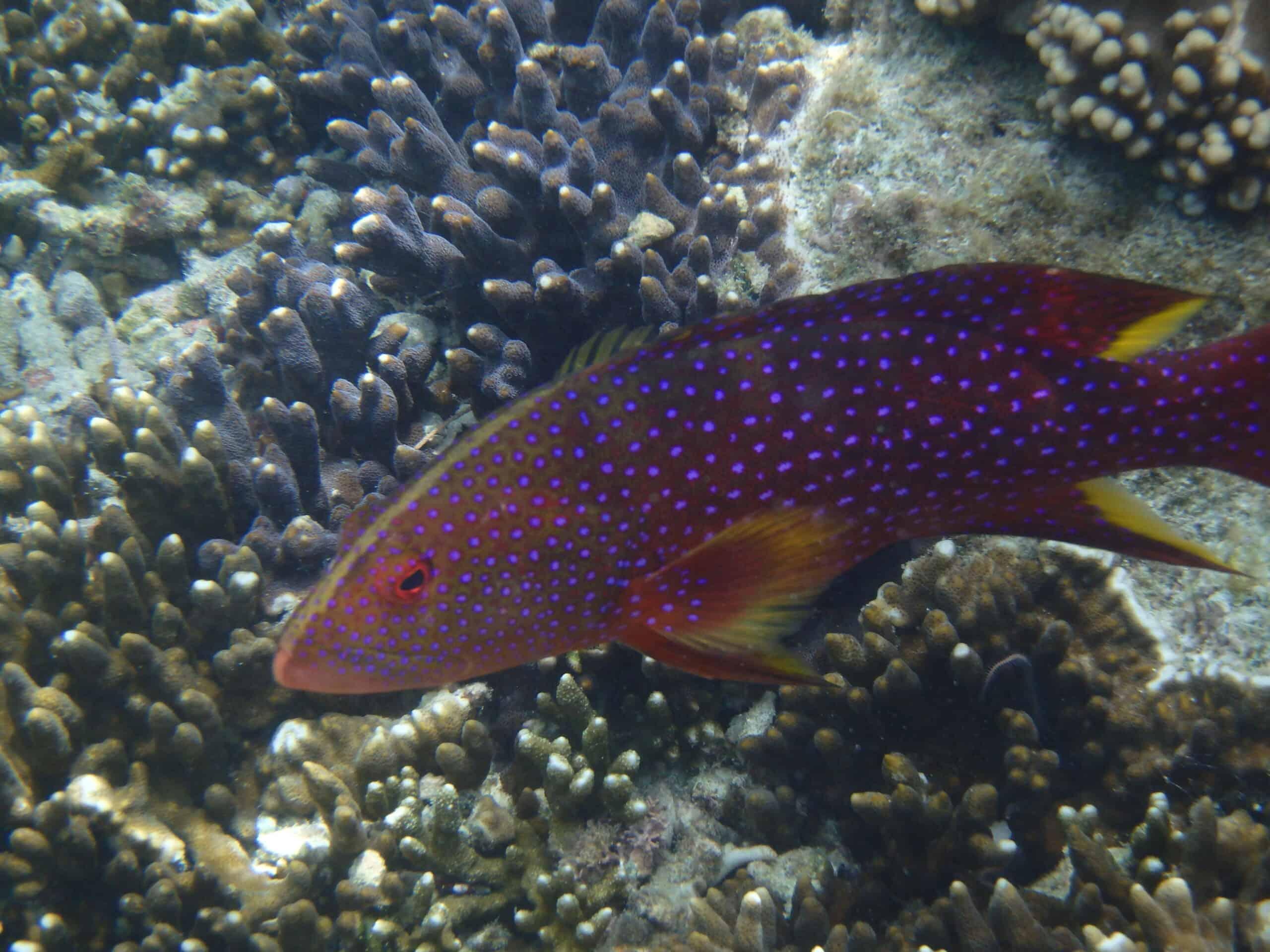 Joli poisson - fond sous marin Calédonie